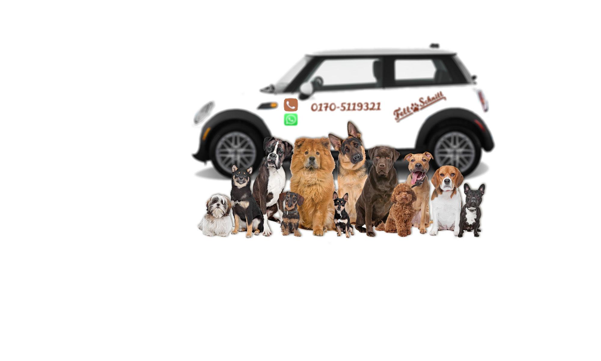 mobiler Hundesalon München