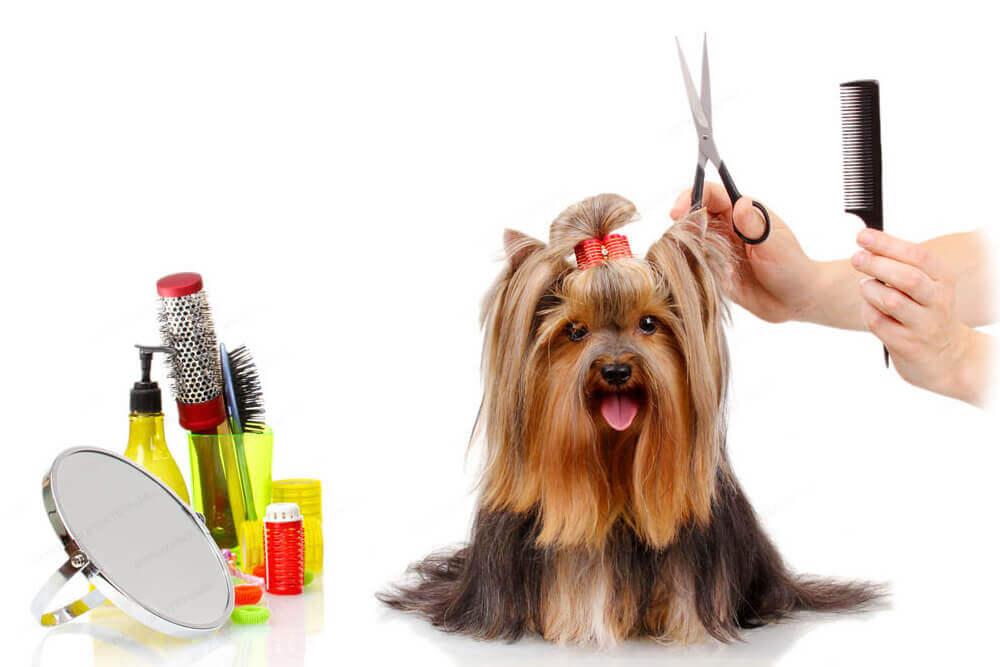 mobiler Hundesalon Tierhaar und Fellpflege zuHause Fellschnitt mobiler Hundefrisör