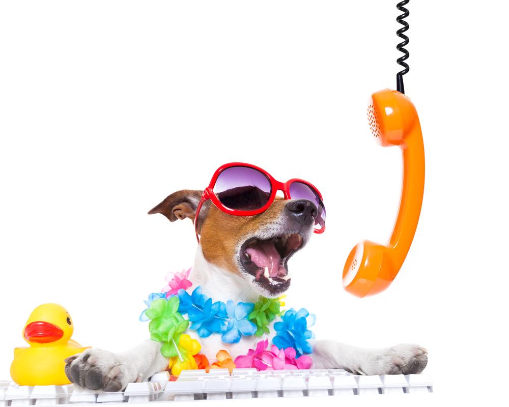Kontakt Fellschnitt mobiler Hundesalon Hundefrisör München Tel Email